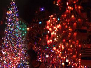 زيتة عيد الميلاد Christmas-Tree-Lighting-Ceremony
