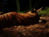 Singapore Zoo Night Safari Tour with optional Buffet Dinner - Singapore